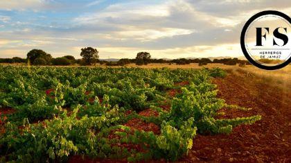 Fuentes del Silencio, la recuperación vitivinícola del Jamuz