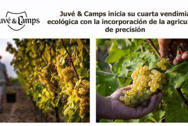 Juvé & Camps inicia su cuarta vendimia ecológica con la incorporación de la agricultura de precisión