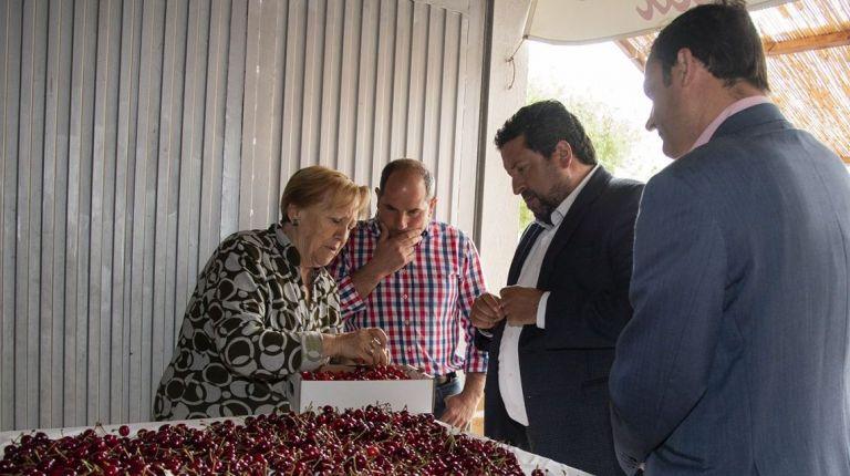 La Diputación impulsa con Castelló Ruta de Sabor el consumo de la cereza autóctona