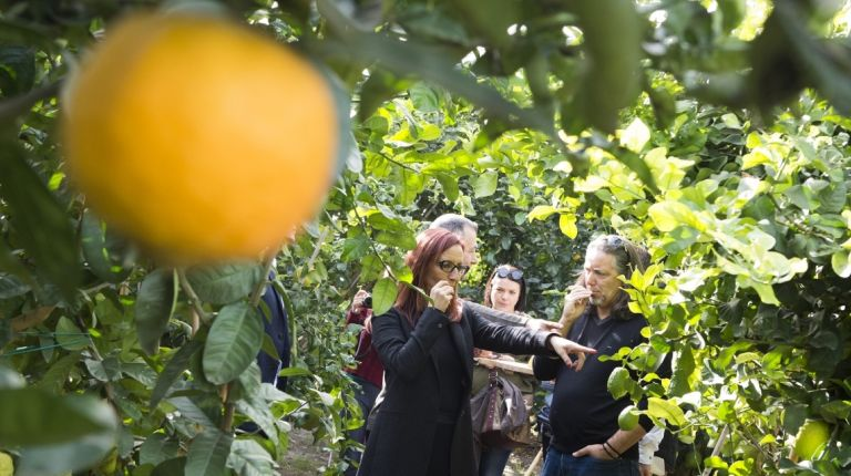 La Diputació colabora con el Hort Botànic 'El Bartolí' para que el centro creado por Vicent Todolí disponga de un laboratorio