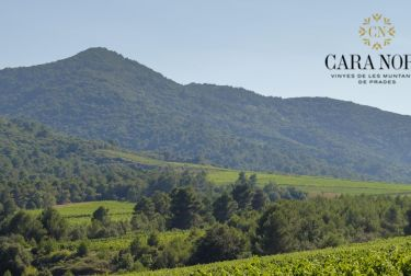 CARA NORD, la consolidación de un proyecto de viticultura en altitud en la Conca de Barberà