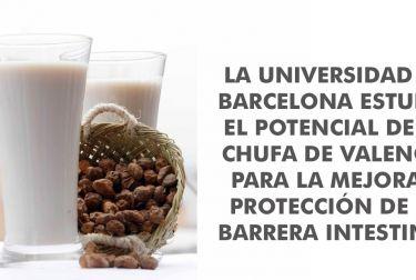 LA UNIVERSIDAD DE BARCELONA ESTUDIA EL POTENCIAL DE LA CHUFA DE VALENCIA PARA LA MEJORA Y PROTECCIÓN DE LA BARRERA INTESTINAL