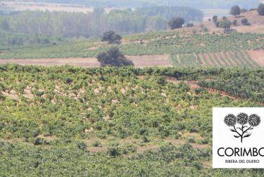 Bodegas LA HORRA cumple 10 años añadiendo valor la Ribera del Duero