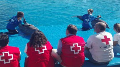 Fundación Oceanográfic y Cruz Roja preparan una campaña de divulgación por las playas sobre varamientos y medusas